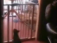Кошка перепрыгнула