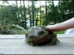 Лягушка любит ласку