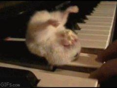 Хомяк на пианино