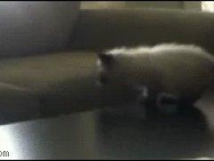 Котенок не допрыгнул