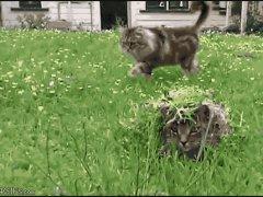 Замаскированная кошка
