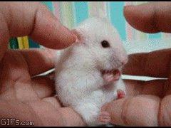 Удивленный мышонок