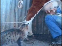 Кошка пьёт молоко