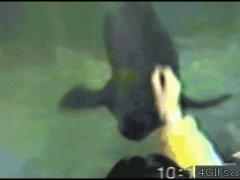 Крутящийся тюлень