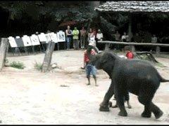 Дарст от слоника