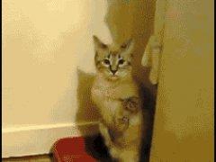 Кошка любит приватность