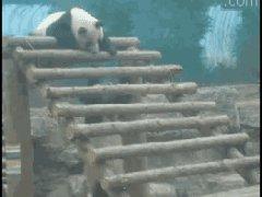 Панда прикололась