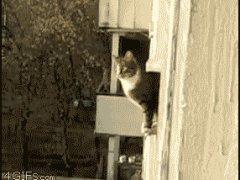 Паркур от кошки