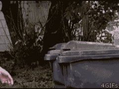 Белка из мусорного ящика