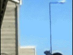 Запрыгнула на балкон