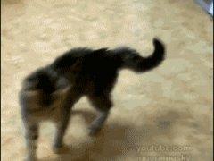 Котенок отбивается на задних лапках
