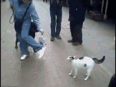 Атакующая кошка
