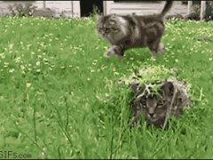 Замаскированная под траву кошка