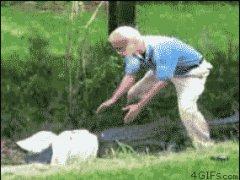 Напал на крокодила голыми руками