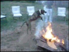 Прыгающая через огонь