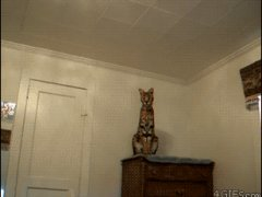 Дикая кошка дома