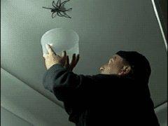 Ловля большого паука