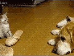 Удар задними лапками