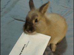 Открывающий письма кролик
