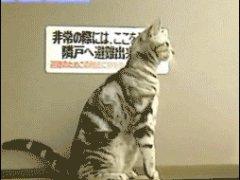Заинтересованная кошка
