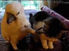 Попугай гладит котенка