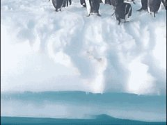 Летающие пингвины