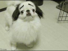 Собачка с бровями
