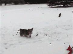 Игра со снегом
