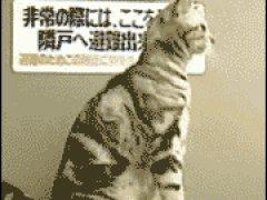 Человекообразная кошка