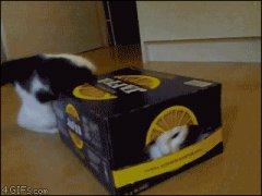 Проклятая коробка