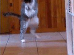 Танец с мышонком