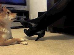 Очень послушная собака