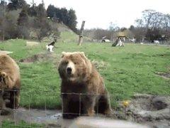 Всем, медведи смешные гифки