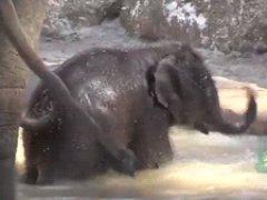Озорной слоненок