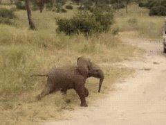 Пробегающий слоненок