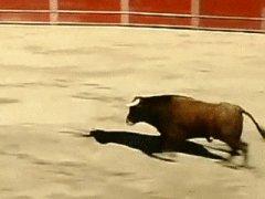 Прыжок через быка