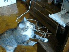 Кошка против дисковода