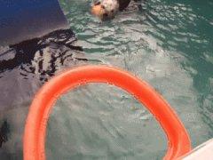 Морская выдра играет в баскетбол