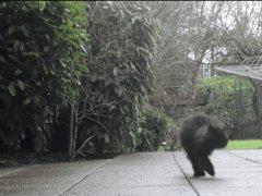 Котёнок на двух лапках