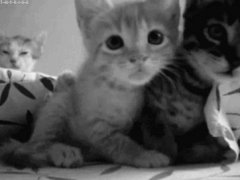 Котята перед камерой