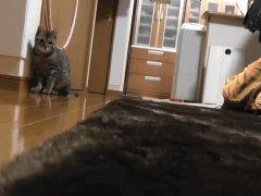 Кошка вратарь