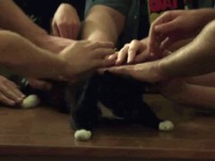 Кошек любят все