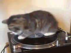 Кошка - ДиДжей