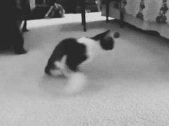 Неунывающий котейка