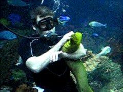 Подводный питомец