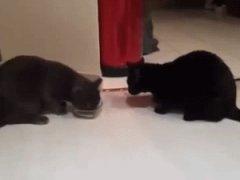 Одна миска на две кошки