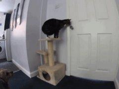 Кошка открывает дверь, чтобы выйти