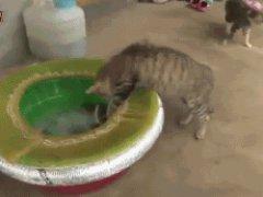 Кот и осьминог гифка