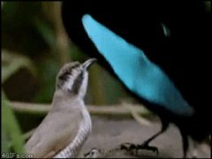 Птица - смайлик