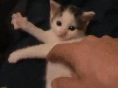 Котёнок играет на невидимой арфе